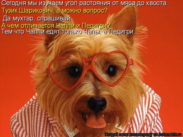 Котоматрица: Сегодня мы изучаем угол растояния от мяса до хвоста. Тузик Шарикович, а можно вопрос? Да мухтар, спрашивай. А чем отличается Чаппи и Педигри?