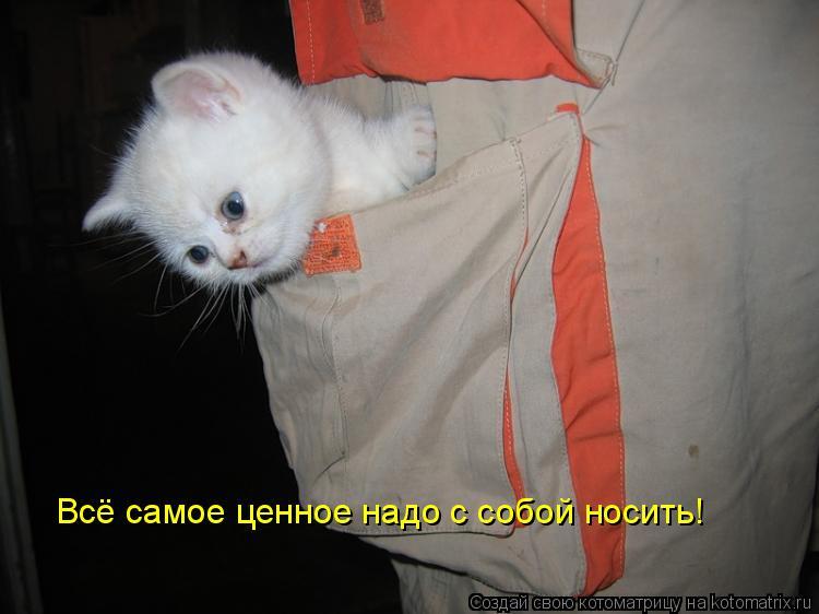 Котоматрица: Всё самое ценное надо с собой носить!