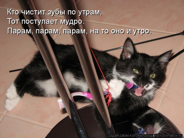 Котоматрица: Кто чистит зубы по утрам, Тот поступает мудро… Парам, парам, парам, на то оно и утро…