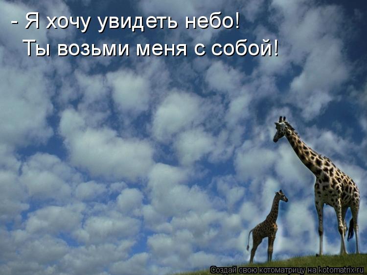 Котоматрица: - Я хочу увидеть небо! Ты возьми меня с собой!