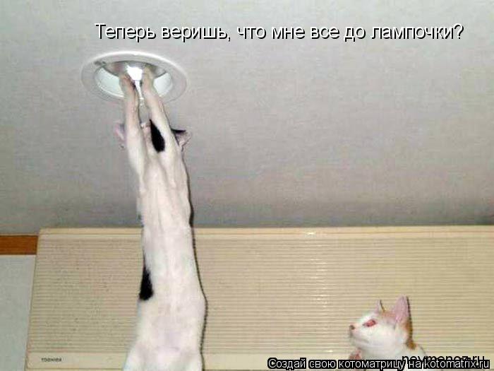 Котоматрица: Теперь веришь, что мне все до лампочки?