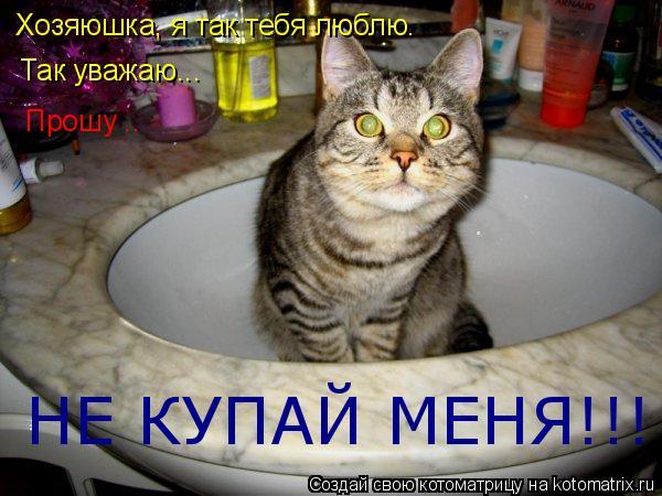 Котоматрица: Хозяюшка, я так тебя люблю. Так уважаю... Прошу .. НЕ КУПАЙ МЕНЯ!!!