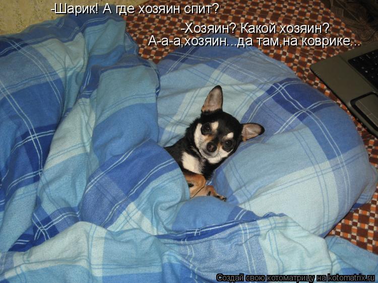 Котоматрица: -Хозяин? Какой хозяин? А-а-а,хозяин...да там,на коврике... -Шарик! А где хозяин спит?