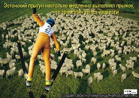 Котоматрица: Эстонский прыгун настолько медленно выполнял прыжок, что трамплин успел зацвести...