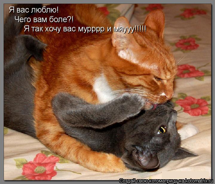 Котоматрица: Я вас люблю! Чего вам боле?! Я так хочу вас мурррр и мяууу!!!!!