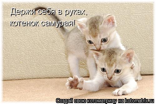 Котоматрица: Держи себя в руках, котенок самурая!