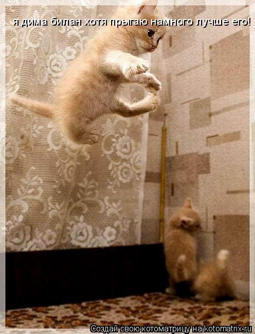 Котоматрица: я дима билан хотя прыгаю намного лучше его!