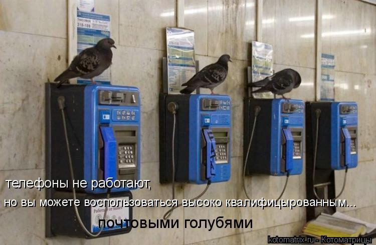 Котоматрица: телефоны не работают, но вы можете воспользоваться высоко квалифицырованным... почтовыми голубями