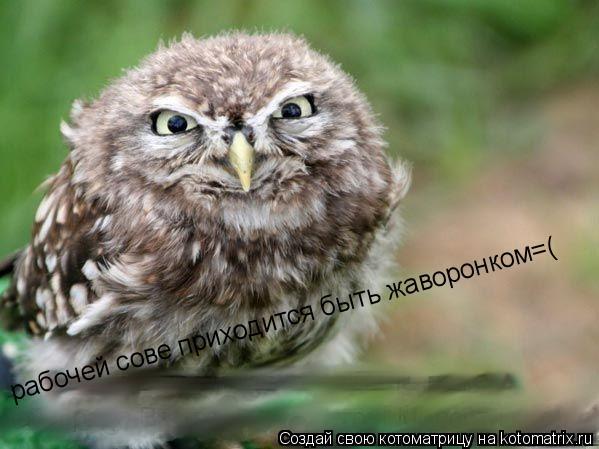 Котоматрица: рабочей сове приходится быть жаворонком=(
