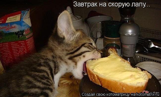 Котоматрица: Завтрак на скорую лапу...