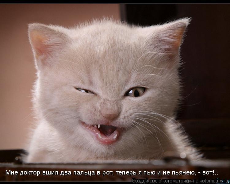 Котоматрица: Мне доктор вшил два пальца в рот, теперь я пью и не пьянею, - вот!..