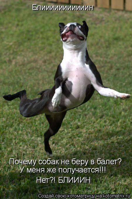 Котоматрица: Блииииииииииин Почему собак не беру в балет? У меня же получается!!! Нет?! БЛИИИН