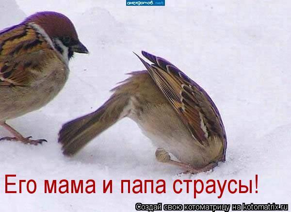 Котоматрица: Его мама и папа страусы!