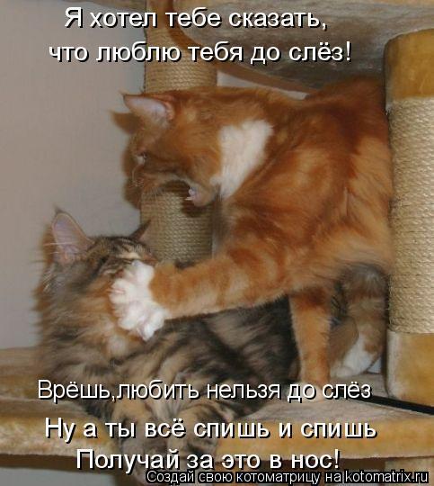 Котоматрица: Врёшь,любить нельзя до слёз