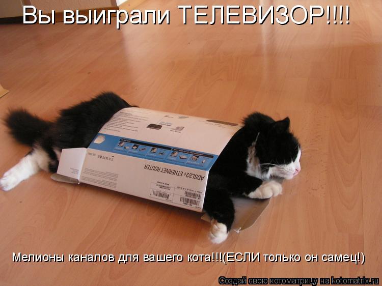 Котоматрица: Вы выиграли ТЕЛЕВИЗОР!!!! Мелионы каналов для вашего кота!!!(ЕСЛИ только он самец!)