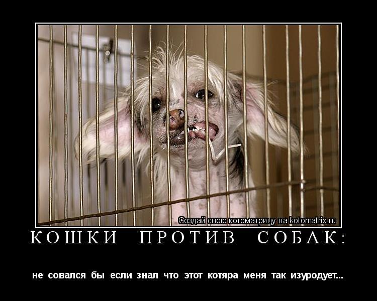 Котоматрица: кошки  против  собак: не  совался  бы  если  знал  что  этот  котяра  меня  так  изуродует...
