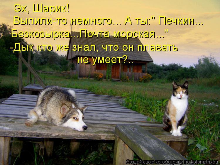 """Котоматрица: Эх, Шарик! Выпили-то немного... А ты:"""" Печкин... Безкозырка...Почта морская..."""" -Дык кто же знал, что он плавать не умеет?.."""