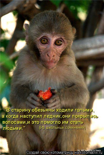 """Котоматрица: """"В старину обезьяны ходили голыми, а когда наступил ледник,они покрылись волосами,и это помогло им стать людьми.""""  (Из школьных сочинений)"""