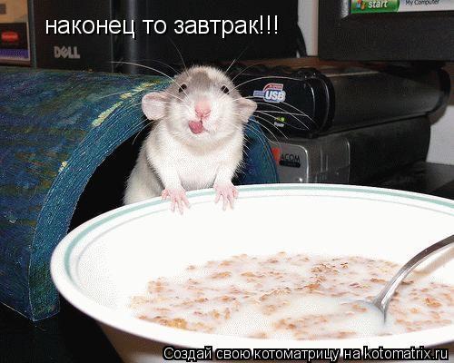 Котоматрица: наконец то завтрак!!!
