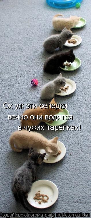 Котоматрица: Ох уж эти селедки вечно они водятся в чужих тарелках!