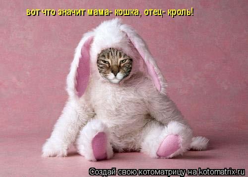 Котоматрица: вот что значит мама- кошка, отец- кроль!
