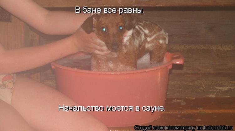 Котоматрица: В бане все равны.  Начальство моется в сауне.