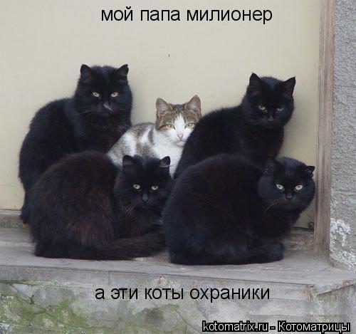Котоматрица: мой папа милионер а эти коты охраники