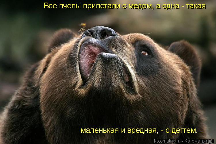 Котоматрица: Все пчелы прилетали с медом, а одна - такая маленькая и вредная, - с дегтем...