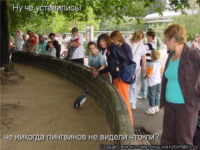 Котоматрица: Ну че уставились! че никогда пингвинов не видели что-ли?