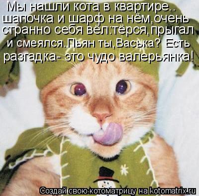 Котоматрица: Мы нашли кота в квартире.. шапочка и шарф на нём,очень разгадка- это чудо валерьянка! странно себя вёл:тёрся,прыгал и смеялся.Пьян ты,Васька?