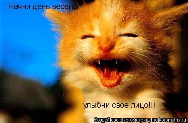 Котоматрица: Начни день весело - улыбни свое лицо!!!