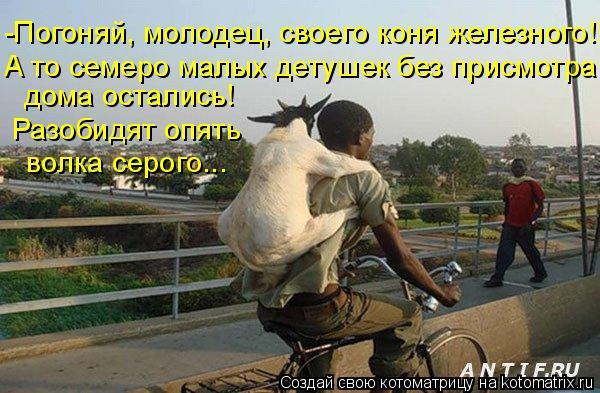 Котоматрица: -Погоняй, молодец, своего коня железного!!! дома остались! А то семеро малых детушек без присмотра Разобидят опять волка серого...
