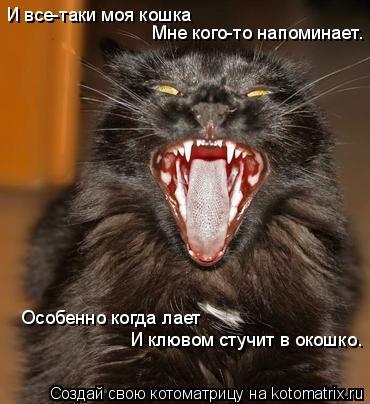 Котоматрица: И все-таки моя кошка Мне кого-то напоминает. Особенно когда лает И клювом стучит в окошко.