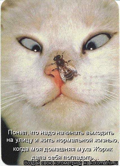 Котоматрица: Понял,что надо начинать выходить  на улицу и жить нормальной жизнью, когда моя домашняя муха Жорик дала себя погладить...