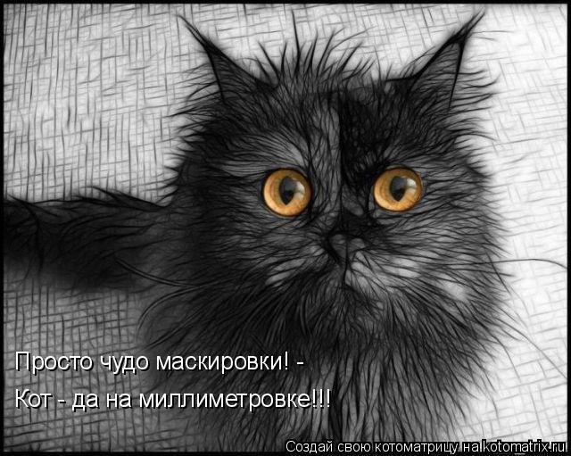 Котоматрица: Просто чудо маскировки! -  Кот - да на миллиметровке!!!