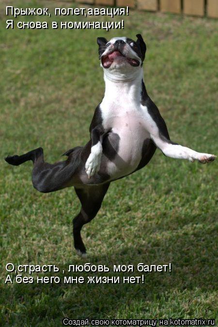 Котоматрица: Прыжок, полет,авация! Я снова в номинации! О,страсть , любовь моя балет! А без него мне жизни нет!