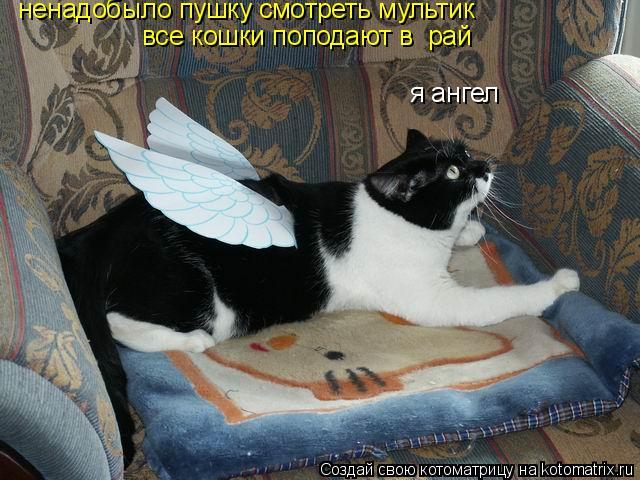 Котоматрица: я ангел ненадобыло пушку смотреть мультик  все кошки поподают в  рай