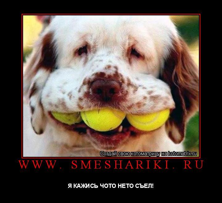 Котоматрица: www. smeshariki. ru Я КАЖИСЬ ЧОТО НЕТО СЪЕЛ!