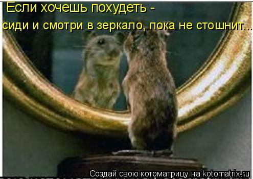 Котоматрица: Если хочешь похудеть - сиди и смотри в зеркало, пока не стошнит...