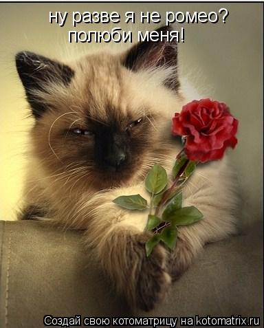 Котоматрица: ну разве я не ромео? полюби меня1 полюби меня!
