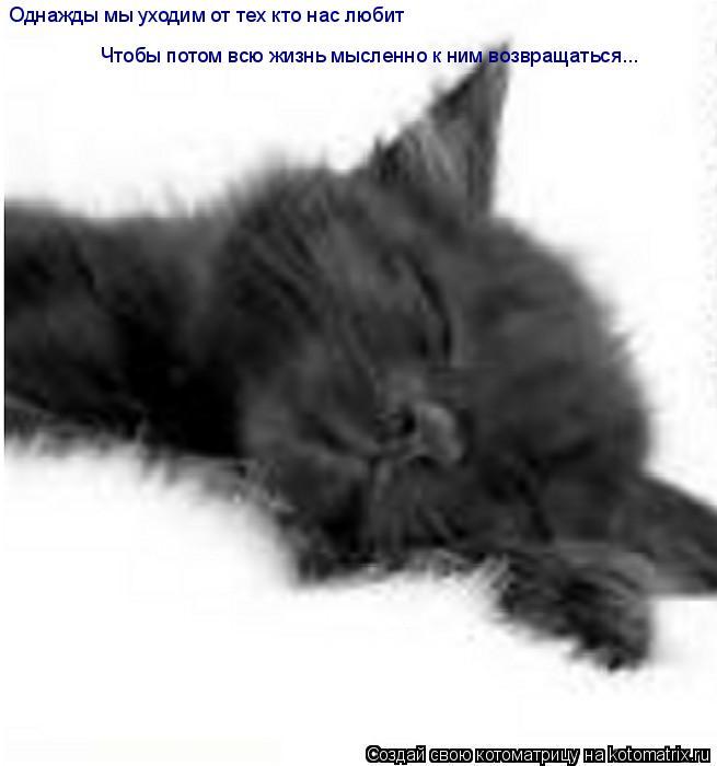 Котоматрица: Однажды мы уходим от тех кто нас любит Чтобы потом всю жизнь мысленно к ним возвращаться...