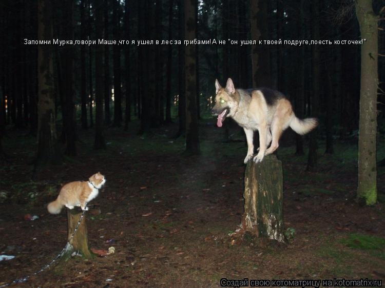 """Котоматрица: Запомни Мурка,говори Маше,что я ушел в лес за грибами!А не """"он ушел к твоей подруге,поесть косточек!"""""""