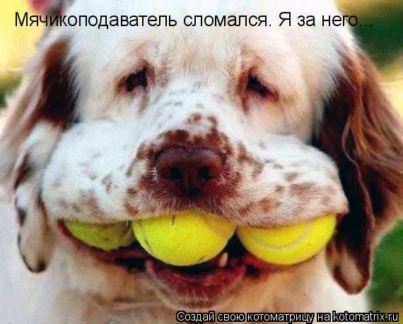 Котоматрица: Мячикоподаватель сломался. Я за него...