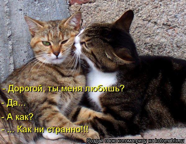 Котоматрица: - Дорогой, ты меня любишь? - Да... - А как? - ... Как ни странно!!!