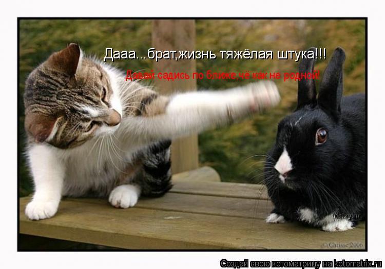 Котоматрица: Дааа...брат,жизнь тяжёлая штука!!! Давай садись по ближе,чё как не родной!