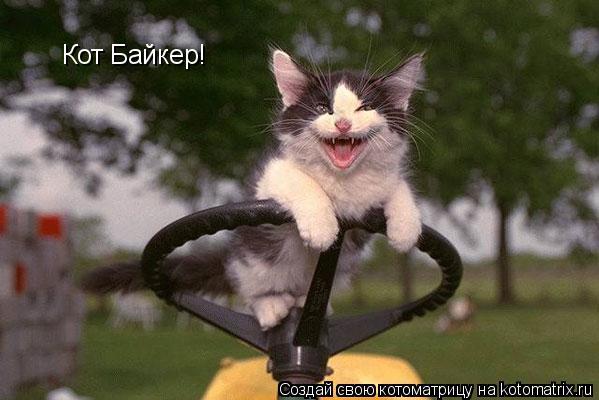 Котоматрица: Кот Байкер!