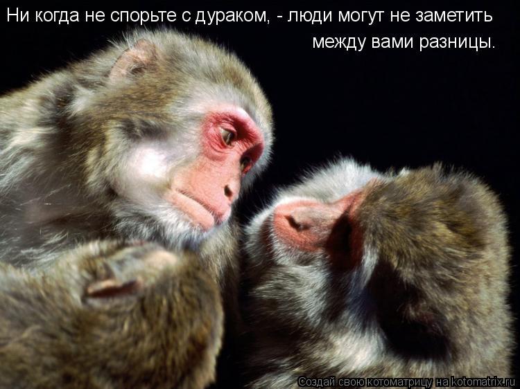 Котоматрица: Ни когда не спорьте с дураком, - люди могут не заметить между вами разницы.