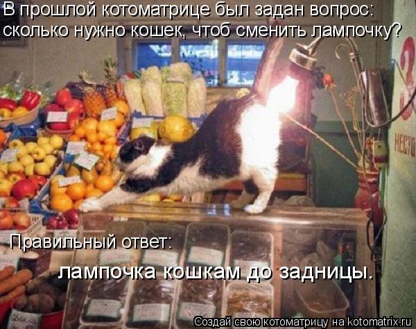 Котоматрица: В прошлой котоматрице был задан вопрос: сколько нужно кошек, чтоб сменить лампочку? Правильный ответ: лампочка кошкам до задницы.