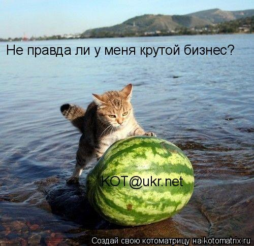 Котоматрица: Не правда ли у меня крутой бизнес? KOT@ukr.net