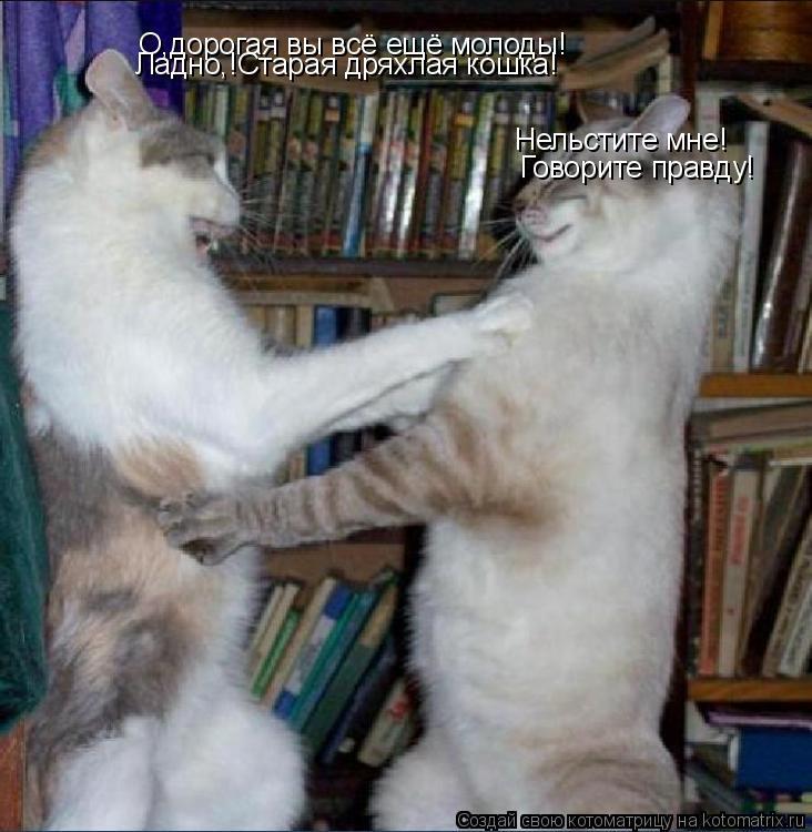 Котоматрица: О,дорогая вы всё ещё молоды! Нельстите мне! Говорите правду! Ладно,!Старая дряхлая кошка!